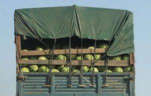 Особенности перевозки арбузов дальнобойщиками в фуре